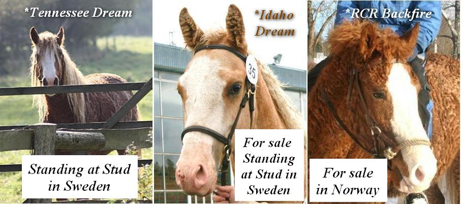 OUR HORSES FOR SALE